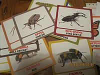 Карточки картинки игра обучающие насекомые набор=16 шт жуки украинско-английский