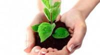 Сучасні способи захисту рослин на кожній стадії зростання