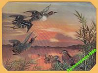 ЯПОНИЯ 1972 Животные Птицы Утки Река Вода Стерео