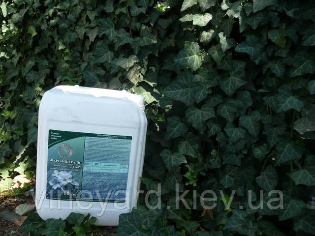 плющ, вертикальное озеленение, растения для балкона, терраса, забор, зеленая изгородь, вечнозеленые, сравнить, цена