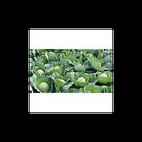 Семена капусты Флексима F1 2500 сем. калибр. Рийк цваан.