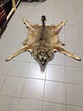 Шкура вовка, фото 2