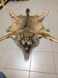 Шкура вовка, фото 3