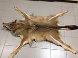 Шкура вовка, фото 4