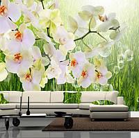 """Фото обои """"Белые орхидеи"""", Фактурная текстура (холст, иней, декоративная штукатурка)"""