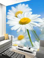 """Фото обои """"Белые ромашки"""", Фактурная текстура (холст, иней, декоративная штукатурка)"""