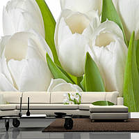 """Фото обои """"Белые тюльпаны"""", Фактурная текстура (холст, иней, декоративная штукатурка)"""