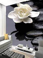 "Фото обои ""Белый цветок на камнях"", Фактурная текстура (холст, иней, декоративная штукатурка)"