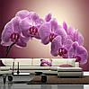 """Фото обои """"Ветка орхидеи"""""""