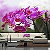 """Фото обои """"Веточка малиновой орхидеи"""""""