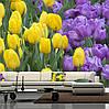"""Фото обои """"Желтые и фиолетовые тюльпаны"""""""