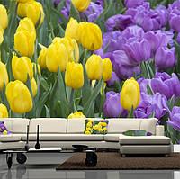 """Фото обои """"Желтые и фиолетовые тюльпаны"""", Фактурная текстура (холст, иней, декоративная штукатурка)"""