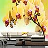 """Фото обои """"Желтые орхидеи"""""""