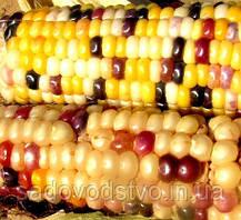 Кукуруза   Вышиванка