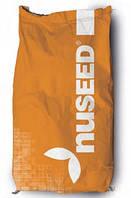 Семена сорго Спринт W компании Nuseed