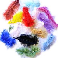 Перья натуральные цветные, 30 шт