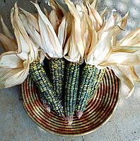 Кукуруза Изумруд