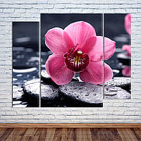 """Модульная картина """"Орхидея на камне"""""""