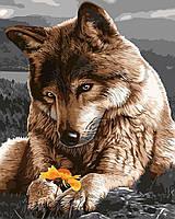 Раскрашивание по номерам без коробки Волк с цветком (BK-GX9713) 40 х 50 см
