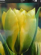 Тюльпан зеленоцветковый Formosa