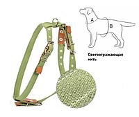 Шлея Collar х/б тесьма для мелких собак