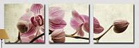 Картины по номерам 50х150 см. Триптих Солнечный день, фото 1