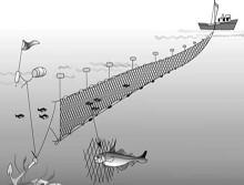 Сети рыболовные ( одностенные ) для промышленного лова