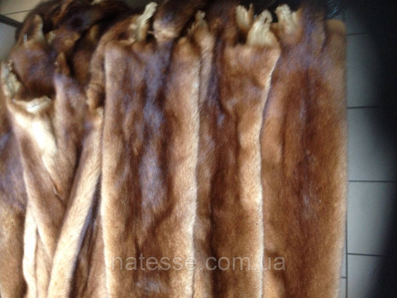 Шкуры мех норка цвета золото датская, самцы 70-75 см