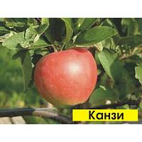 Яблоня Канзи(Никотер)