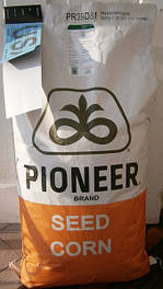 Семена подсолнечника компании Пионер (Pioneer)