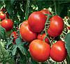 Семена томата Уманья 73-602 100 сем. Рийк цваан.