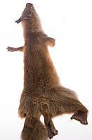Лисица лесная тонированная