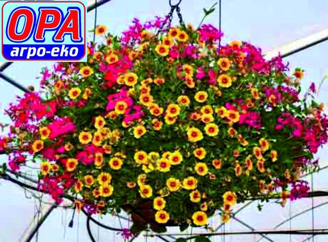 Квіти у підвісках ОРА Агро-еко