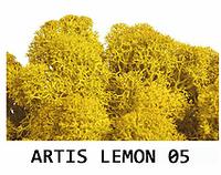 """МОХ для декора. Прямые поставки от """"Artis Green"""". Lemon 05"""