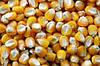 Семена кукурузы НС-400, фото 2