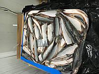 Рыба с/м для продажи и промпереработки
