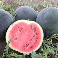 Арбуз Ред Стар F1 ранний гибрид с плодами темно-зеленого цвета с длительным периодом сбора урожая
