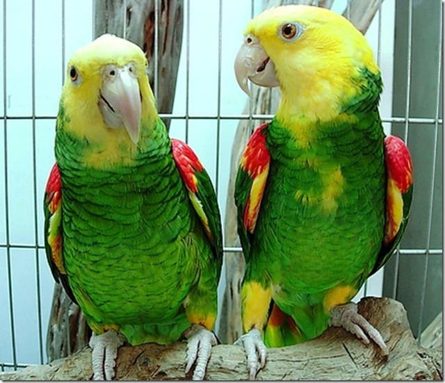Товары для декоративных птиц