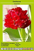 Тюльпан Emblazon