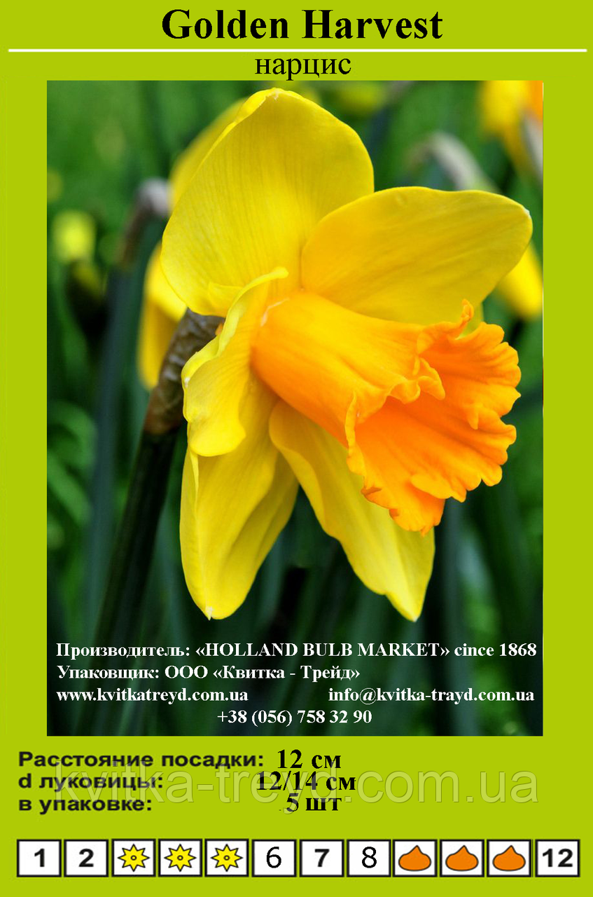 Нарцисс Golden Harvest