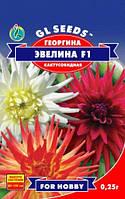 Семена Георгины Эвелина d=9-12cm кактусовидная смесь