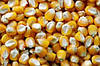 Семена кукурузы НС-2016, фото 4
