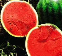 Арбуз Топ Мара F1 ранний гибрид для открытого и закрытого грунта с округлыми большими плодами весом 14 кг