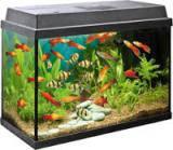 Оформление и перезапуск аквариума