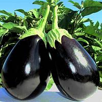 Баклажан Тиррения F1 семена для выращивания в жарких условиях в теплицах,открытом грунте