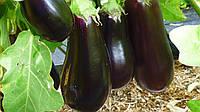 Баклажан Анет F1 семена раннего сорта с длительным периодом плодоношения