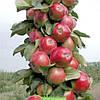 Яблоня колоновидная сорт Валюта (зимняя)