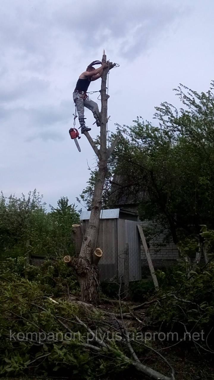 Прибирання дерев з ділянки (067) 409 30 70