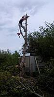 Уборка деревьев с участка (067) 409 30 70