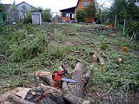 Расчистка участка от деревьев (067) 409 30 70